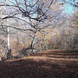 Есен by Georgi Kolev - Novices Only Landscapes ( небе., гора., слънце., есен., време. )