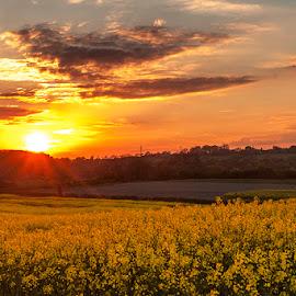 Sunset in Dale Abbey by Stuart Johnson - Landscapes Sunsets & Sunrises ( canon, agriculture, spring, rapeseed, canon 5d mark 2, sunset, dale abbey, crops, sunrise, springtime, flower, fields, derbyshire )