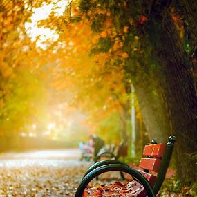gone with the autumn by Cornelius D - City,  Street & Park  City Parks