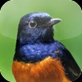 Suara Burung Murai Batu APK for Ubuntu
