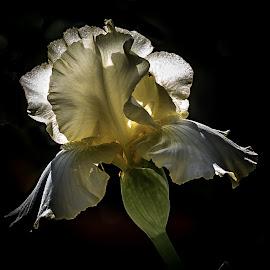 by Jackie Eatinger - Flowers Single Flower