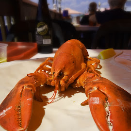 Lobster for Lunch by Vivian Gordon - Food & Drink Plated Food ( food, lobster, lunch, closeup )