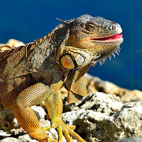 Modern day Dragon by Alan Potter - Animals Reptiles