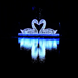 Night of Lights by Michelle Kelly - Public Holidays Christmas (  )