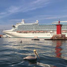 Pelican by Jenny Hammer - Instagram & Mobile iPhone ( ocean, bird, cruise, pelican, sea )