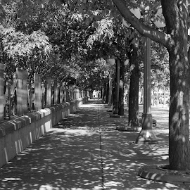 Mackenzie's Walk by Scott Thiel - City,  Street & Park  Street Scenes ( ncr, canada, park, black and white, street, ottawa, trees, ontario, major's hill park, leaves, byward market, sidewalk,  )