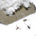 Tiny Wasps