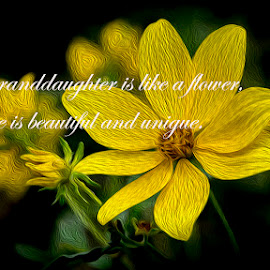 To my Granddaughter by Greg Bennett - Typography Captioned Photos ( daisys, child, female, grandfather, infant, granddaughter, yellow, baby, flowers, oil painting, grandmother )