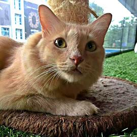 Delightful kitty by Jo-Ann Tan - Animals - Cats Portraits