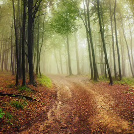 20170916-DSC_1701 by Zsolt Zsigmond - Landscapes Forests ( green color, mystery, forest, leaf, landscape, sunlight, light - natural phenomenon, tree, nature, season, autumn, fog, outdoors, woodland, sunbeam, mist )