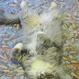 Upsidedown Kitty by Johnny Knight - Novices Only Pets ( kitten, cat, family, pet, artistic, mammal, animal )