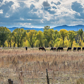 Famous Horses by Chad Roberts - Animals Horses ( famous, horses, fall, horse, trees )