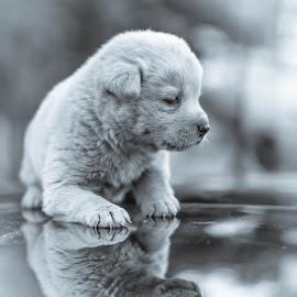 My Little Bear by David Kim (Wow Moments) - Animals - Dogs Puppies ( #jindo, #miteddybear #puppy #reflexion #lovelyanimal #, #doglife )