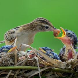 Eat Baby, Lunch Time! by Leovin Agustim - Animals Birds ( natura, bird, nature close up, birds, animal )
