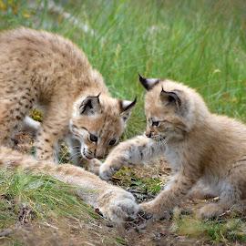 Playing by Anngunn Dårflot - Animals Other Mammals