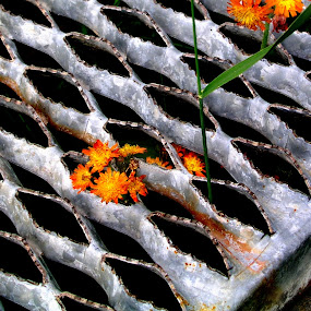 Diamonds Set Flowers by Dorothy Koval - Abstract Patterns ( setting, patterns, hawkweed, metal, diamonds, pwcabstractdiamonds, flowers, abandoned )
