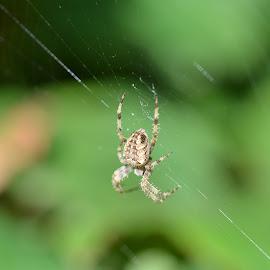 by Kris Van den Bossche - Animals Insects & Spiders