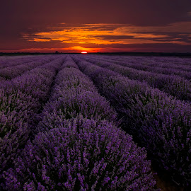 Sunset by Eduard Valentinov - Landscapes Sunsets & Sunrises ( fragrance, travel, vibrant, plantation, backdrop, sky, nature, cultivation, flower, spa, texture, twilight, agriculture, horizon, lavender, sunlight, dusk, row, rural, country, scent, outdoors, moody, cultivated, scene, view, plant, landscape, blossom, sun, tranquil, dramatic, bulgaria, aromatherapy, purple, cloudscape, landscaped, field, amazing, red, industrial, pattern, color, sunset, cloud, summer, sunrise, stunning, scented )