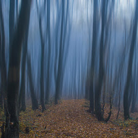Into the woods by Sinisa Plevnik - Landscapes Forests ( nature, autumn, fog, beautiful, trees, forest, road, leaves, woods, misty )