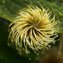 after flowering by LADOCKi Elvira - Nature Up Close Gardens & Produce