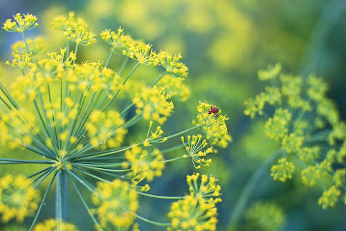 by Siniša Almaši - Nature Up Close Other plants ( macro, green, nature, light, plant, up close, yellow, insect, colors )