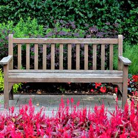Cantigny Zen by Beth Bowman - City,  Street & Park  City Parks (  )