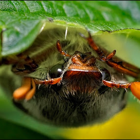 by Dmitry Ryzhkov - Animals Insects & Spiders ( ryzhkov, russia, moscow, photo, photography, dmitry )