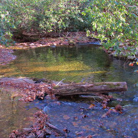 Stream on the parkway. by Terry Linton - Nature Up Close Water ( tranquil, relax, tranquility, relaxing )