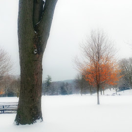 Sprinbank park 2 by Peter Krahn - Landscapes Weather ( picnic clouds snow trees winter )
