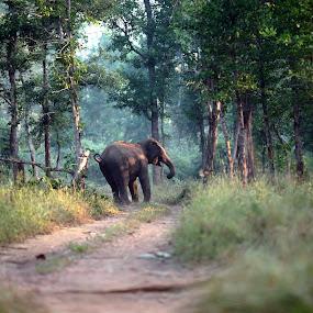 Elephants of Betla by Anindya Sengupta - Animals Other Mammals ( elephants, animals, national park, reserves, india, forest )