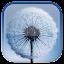 Dandelion Live Wallpaper for Lollipop - Android 5.0