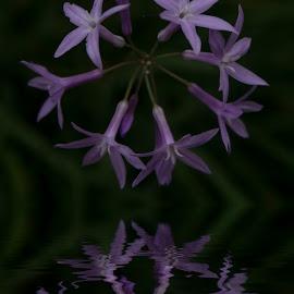 Purple reflection by Egon Zitter - Digital Art Things ( water, reflection, purple, dark, flower )