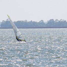 Windsurfer by Prentiss Findlay - Sports & Fitness Watersports ( sailing, ocean, beach, windsurfer, river )