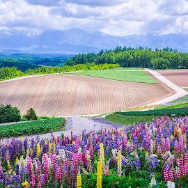 Shikisai-no-oka by Crispin Lee - Landscapes Prairies, Meadows & Fields