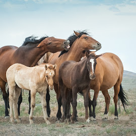 by Dawn Riddle - Animals Horses