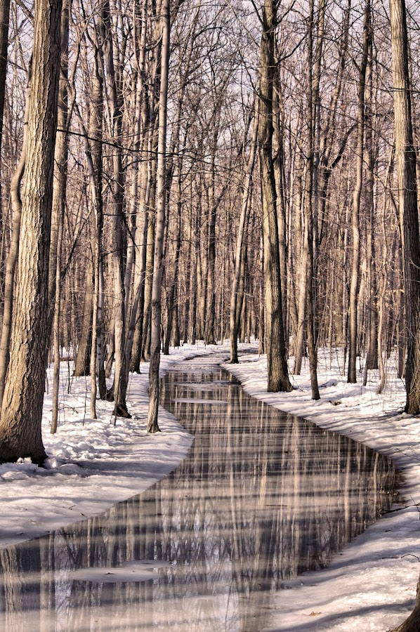 Cold path by Arnaud Charil - Landscapes Weather ( water, winter, nature, cold, path, trees, forest, frozen, vertical lines, pwc, , landscape, snow )