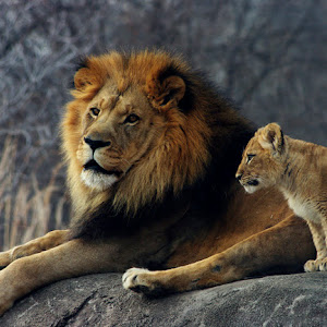 Lion and Cub.jpg