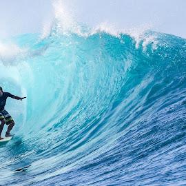 Money trees by Bernard Tjandra - Sports & Fitness Surfing