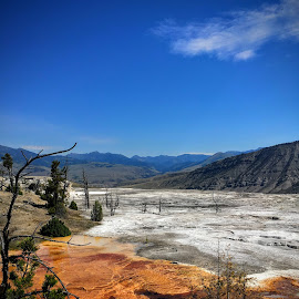 Upper Terraces Mammoth Hot Springs by Karen Coston - Landscapes Travel ( nature, wyoming, geothermal, yellowstone national park, mammoth hot springs )