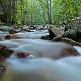 by Siniša Almaši - Nature Up Close Water ( water, up close, stream, colors, forest, morning, landscape, woods, depth, nature, cascade, trees, stones, rocks, light, river )