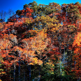 Kentucky in the Fall by Paul Mays - Landscapes Forests
