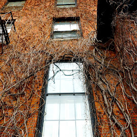 by Erin Howlett - Buildings & Architecture Other Exteriors ( red, boston, window, nature, brick )