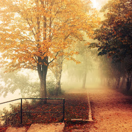 20121022-DSC_0038 by Zsolt Zsigmond - City,  Street & Park  City Parks ( park, fog, autumn, fall, trees, mist )