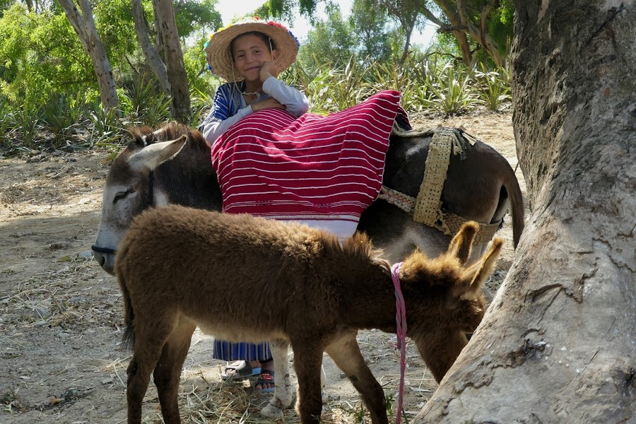 Donkey handler by Lyn Simuns - Babies & Children Children Candids ( donkey, boy )