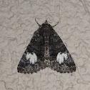 Ererbid Moth