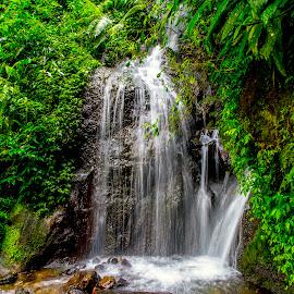 Curug Cibogo by Abdul Rahman - Nature Up Close Water
