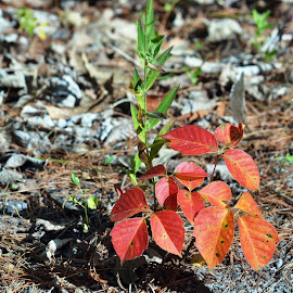 Plant by Jaliya Rasaputra - Nature Up Close Trees & Bushes