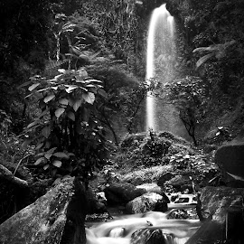 little waterfall by Aulia Paramedika - Nature Up Close Water ( renewal, green, trees, forests, nature, natural, scenic, relaxing, meditation, the mood factory, mood, emotions, jade, revive, inspirational, earthly )