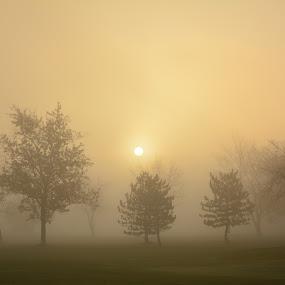 A Foggy Morning by Thomas Fitzrandolph - Landscapes Sunsets & Sunrises ( nature, fog, niagara county ny, trees, nikon d5200, beauty, sunrise, lockport ny,  )