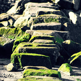pathway by Todd Reynolds - Nature Up Close Rock & Stone